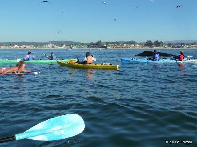 Foto de baleia subindo perto de mulher