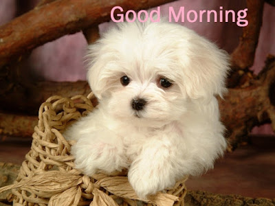 Good Morning with Puppy