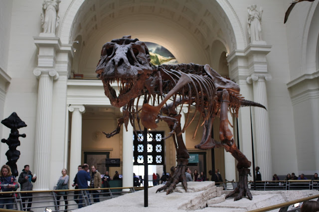 Sue the Tyrannosaurus Rex at The Field Museum in Chicago