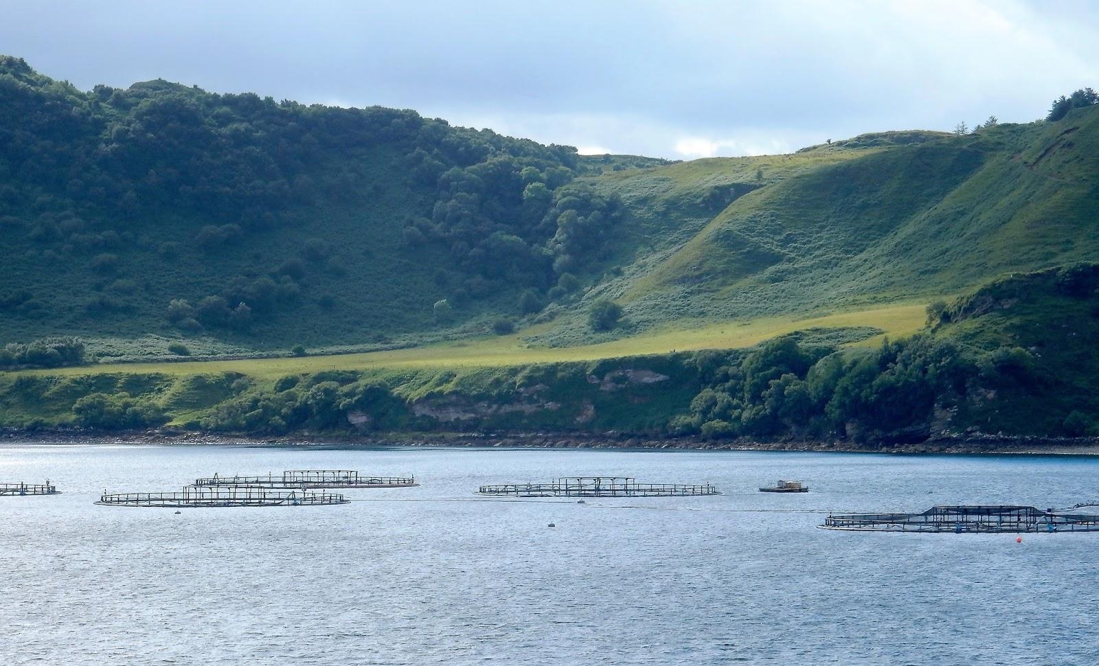 Trout Fish Farming