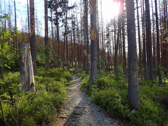 Chociaż szlak jest leśny, to przy odpowiednim oświetleniu robi się fotogeniczny