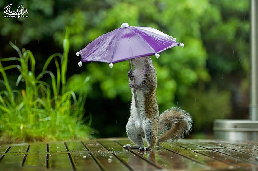 omorfos-kosmos.gr - Φωτογράφος δίνει σε σκίουρο μια μικρή ομπρέλα για να προστατευθεί από τη βροχή - Το αποτέλεσμα είναι εκπληκτικό! (Εικόνες)