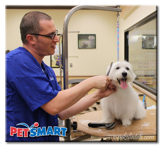 Male PetSmart Groomer trimming facial hair on Westie