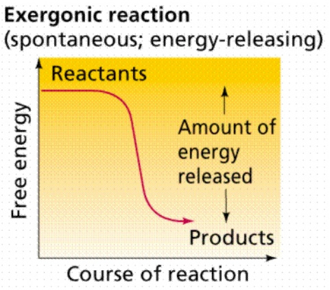 Exorgenic reaction