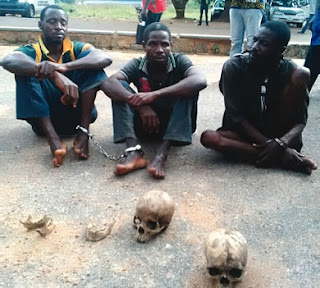 Oyo Ritualists Traded Human Skull At N10k, Arrested, Makes Shocking Confessions