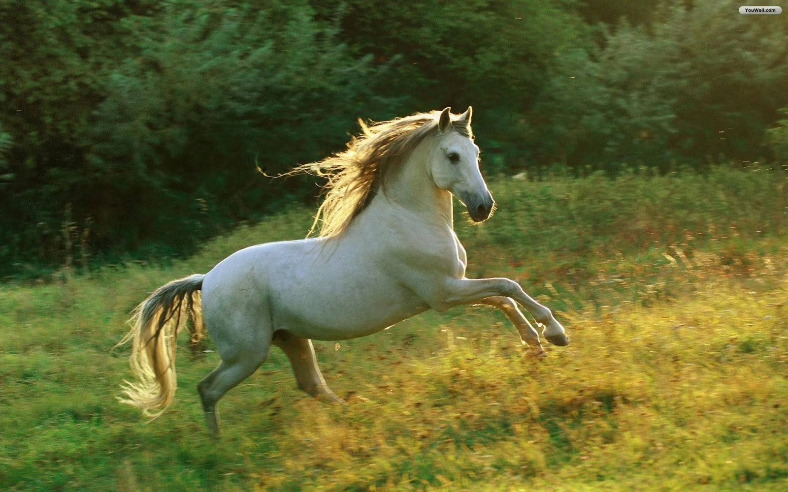 Fantastic   Wallpaper Horse Ultra Hd - iCcZAmJ  Trends_6610082.jpg