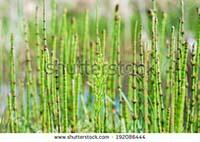 http://indonesian-herbal-medicine.blogspot.com/2015/08/home-remedies-for-hemorrhoid.html