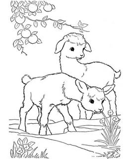 Biboca Ambiental Desenhos Para Colorir Animais Da Fazenda