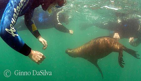 Buceo con lobos marinos en Puerto Pirámides
