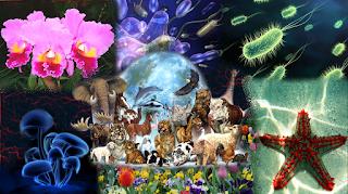 Resultado de imagen de los cinco reinos