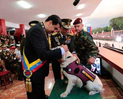 Maduro ascendió y condecoró a dos perros de la GNB (+Video)