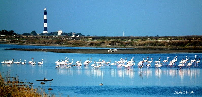 Phare de Faraman et flamants roses