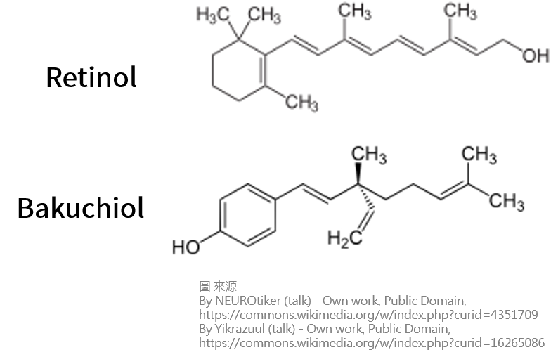 明星抗老成分「維生素A(Retinol,視黃醇)」的可靠替代者「補骨脂酚(Bakuchiol)」?@MSMF 知識PART