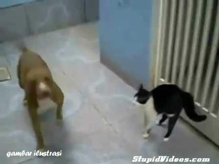 Gambar Anjing Bull Terrier