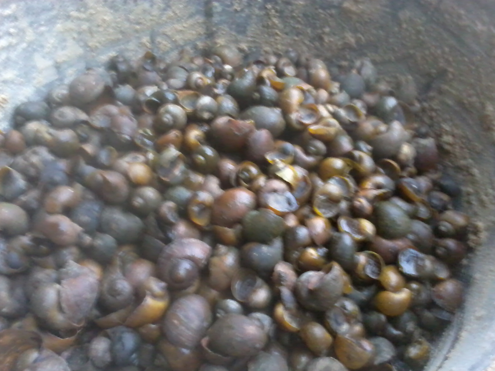 Mengenal Jenis Pakan Ternak Bebek Petelur Agar Meningkatkan Produktivitas Telurnya