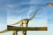 Revealed, Titanosaourus Animal Life in Largest Ever World