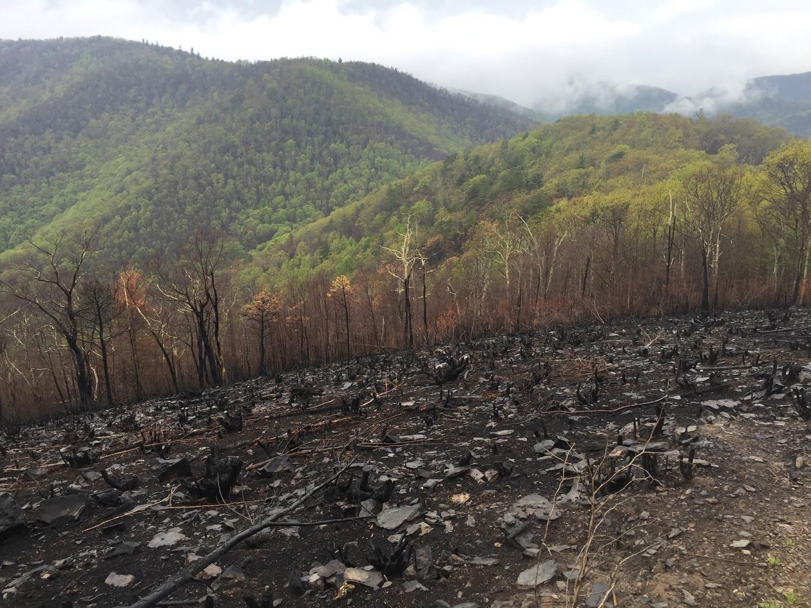 Wandering Virginia: SNP's Brown Mountain/Big Run Portal/Rocky Mtn