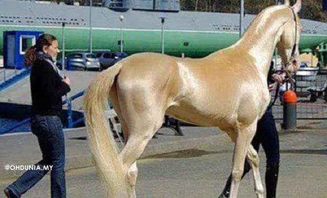 'Kuda Emas' Ini Didakwa Baka Milik Nabi Muhammad