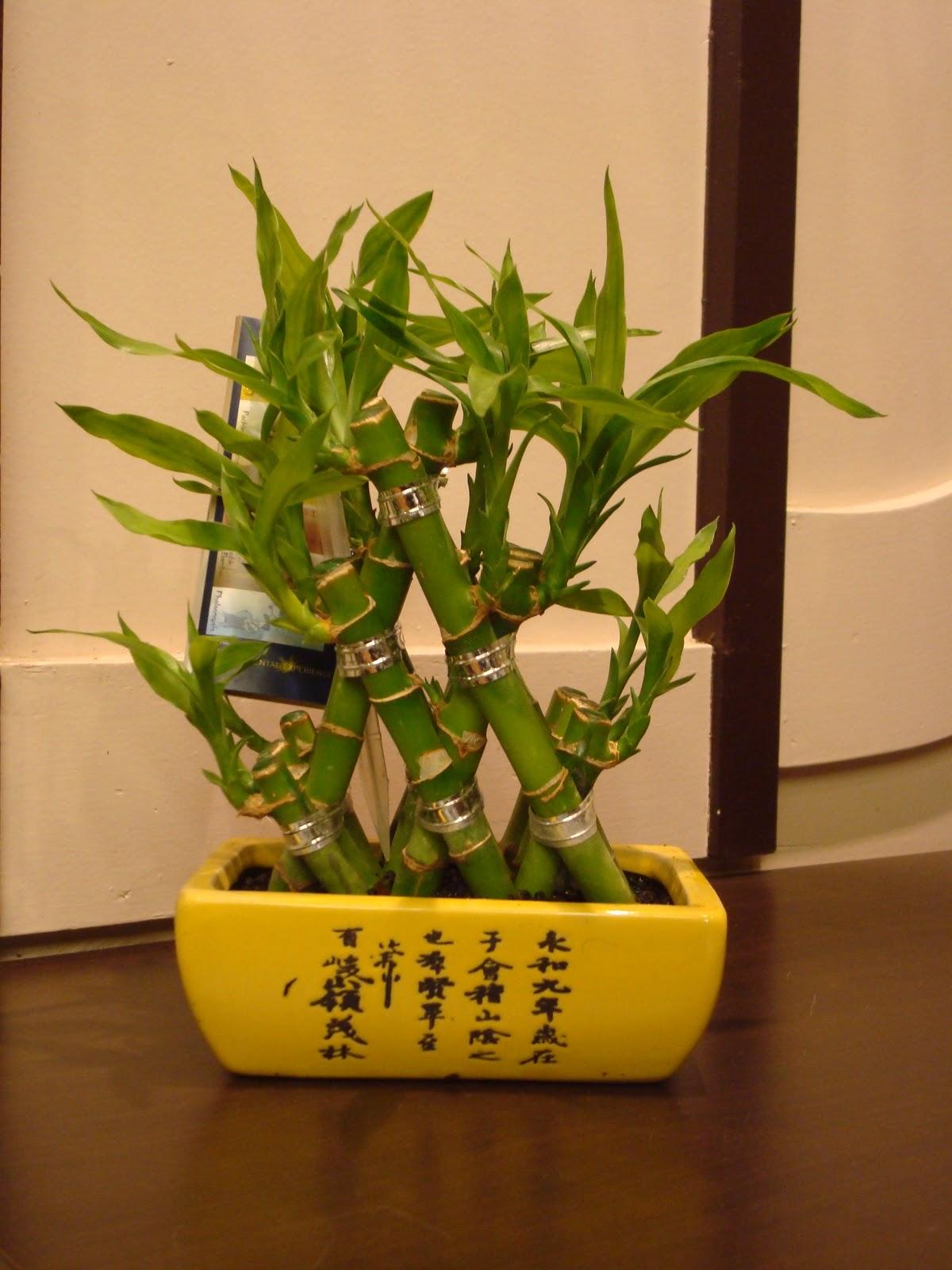 fleuriste isabelle feuvrier le lucky bambou. Black Bedroom Furniture Sets. Home Design Ideas