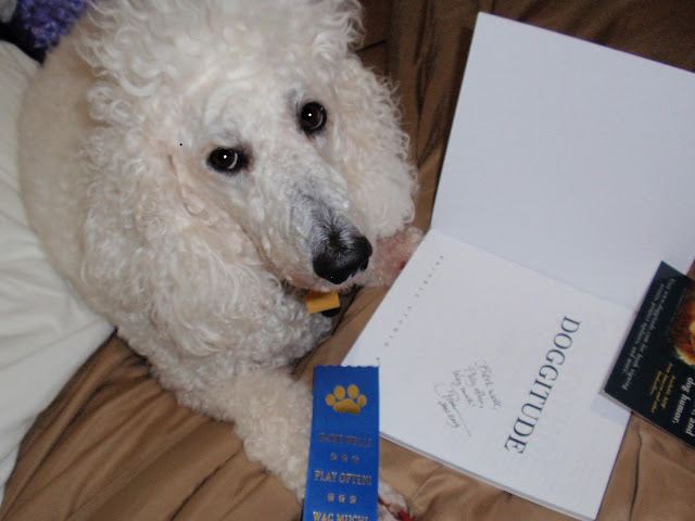 Standard poodle, carmapoodale, look at the book she won.