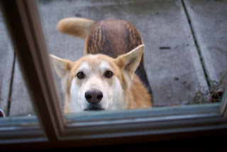 Cuatro consejos para mantener al perro por primera vez
