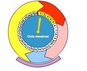 http://wikisaber.es/Contenidos/LObjects/menstrual_cycle/index.html