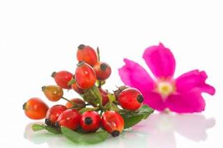 14 Razones por las que deberías utilizar la rosa mosqueta
