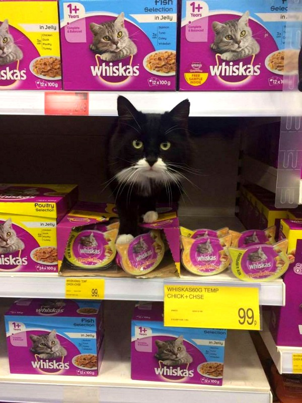 whiskas poultry in jelly