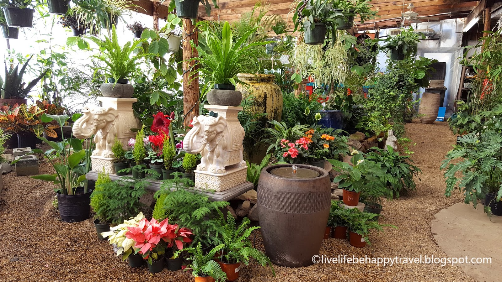 Indoor Garden Center Live life be happy tropical indoor garden and salt water fish a trip to a couple of indoor garden centers and a salt water fish store was the perfect cure for the wintertime blues workwithnaturefo