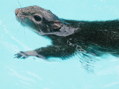 dead squirrel in pool - photo #16