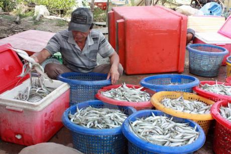 Ngư dân Quảng Ngãi bội thu phiên biển cuối năm dù thời tiết bất lợi