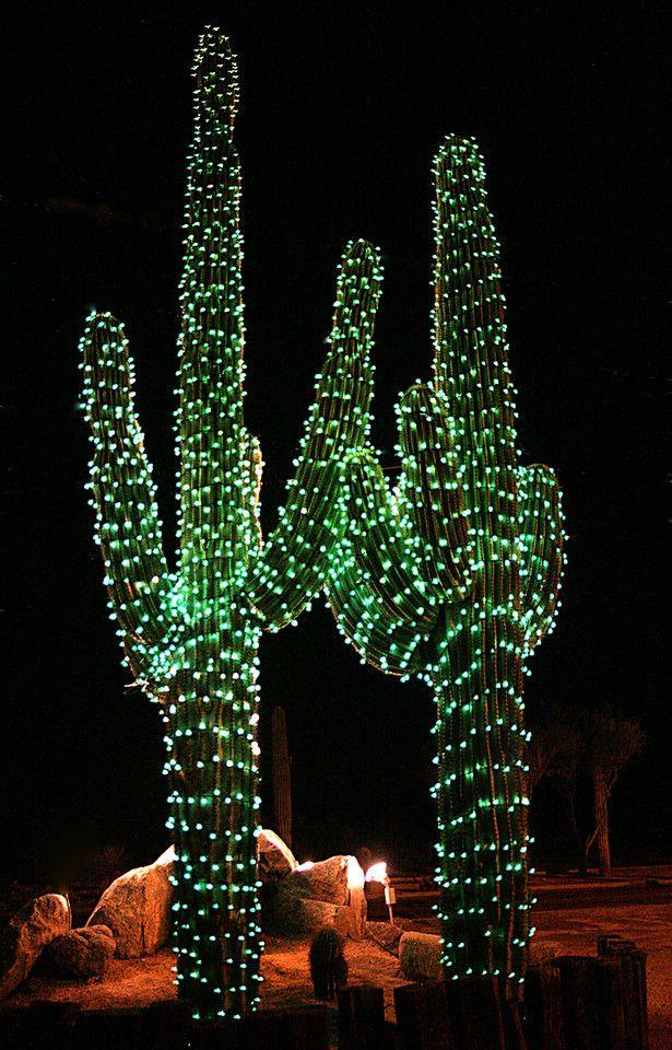 Christmas Cactus Light Page 6 Decor And