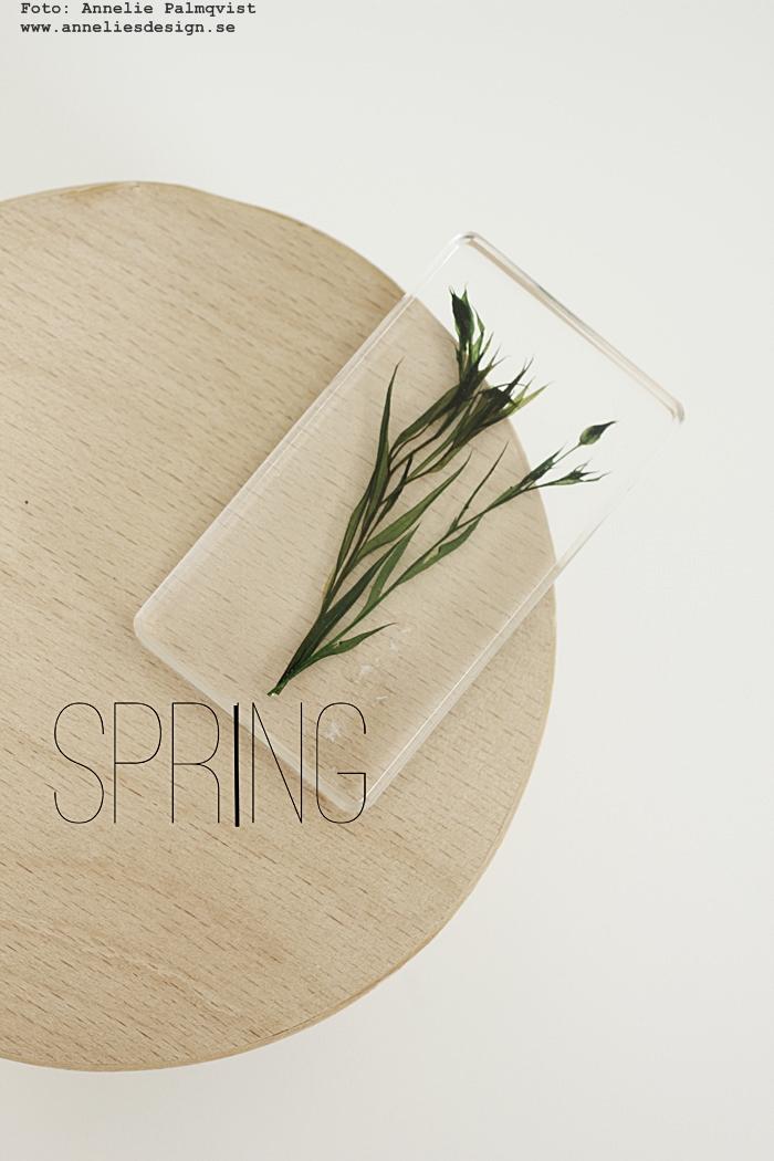 växter i kub, växt i kuber, väster, blomma, blommor, webbutiker, webbutik, nettbutikk, nettbutikker, webshop, nätbutik, nätbutiker, annelies design, inredning, vår, våren,