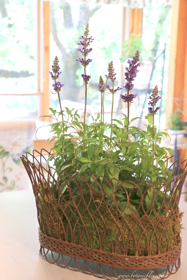 French Wire Basket With Blue Sage on Kitchen Countertop