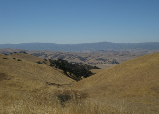 Cluster of trees in a ravine surrounded by dry hills, view from Quien Sabe Road, San Benito County, California