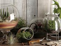 Peluang Bisnis Menguntungkan Budidaya Kaktus Mini