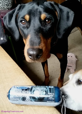 Penny & Sophie were on the hunt for a BLUE Wilderness Wild Rolls #BlueBuffalo#ChewyInfluencer #LapdogCreations ©LapdogCreations #sponsored