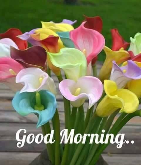 Good Morning Wish for Brother