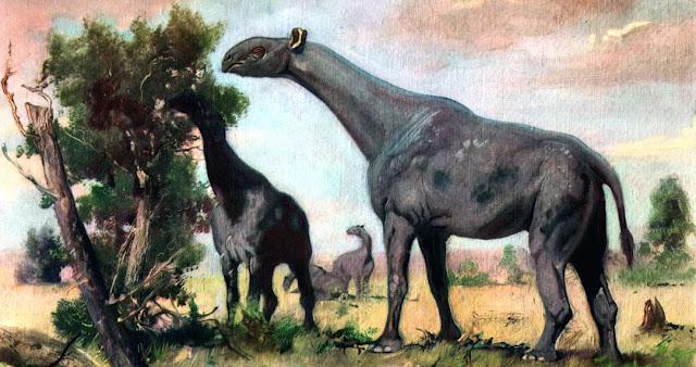 Indricotherium, mamifero terrestre prehistorico