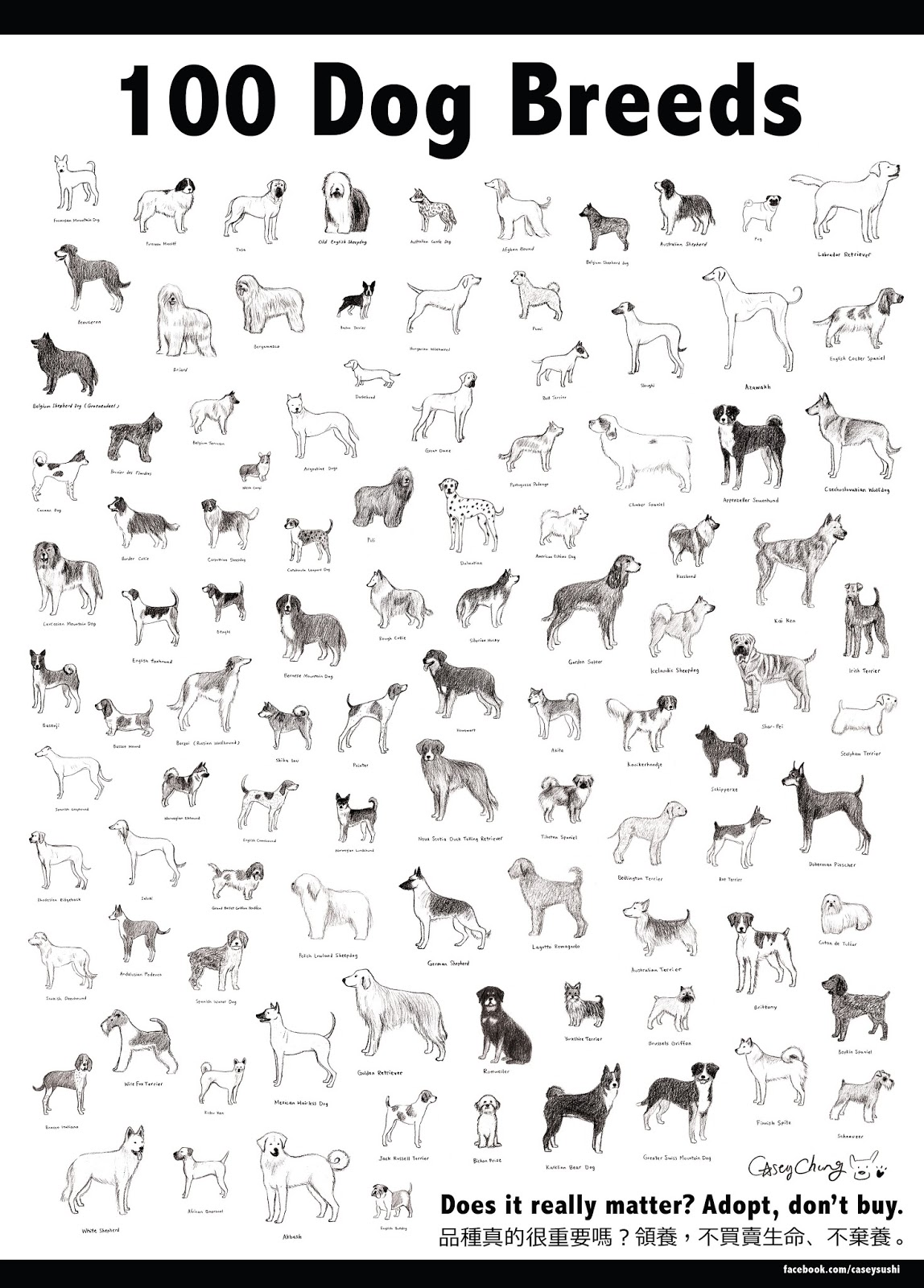 When It Rains Cats And Dogs 100 Dog Breeds
