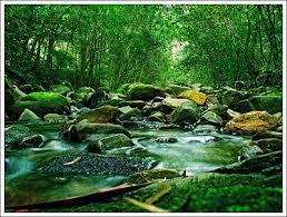 Pengertian Ekosistem, Komponen-Komponen Ekosistem dan Macam-Macam Ekosistem