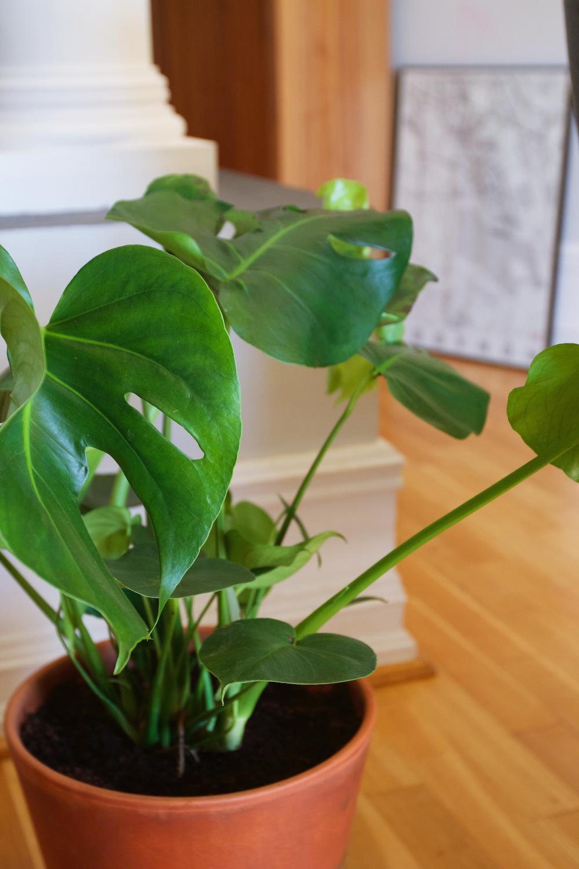 Rośliny Doniczkowe Czy Kupowanie Przez Internet Ma Sens Wnętrza
