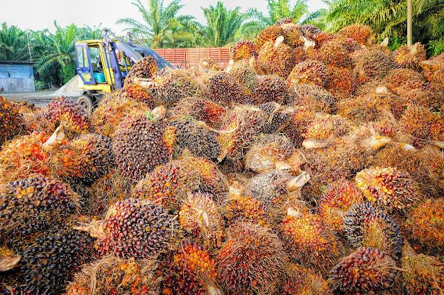 Impacto del Cultivo de la Palma Aceitera