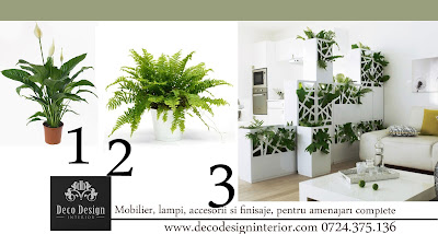 pereti plante interior