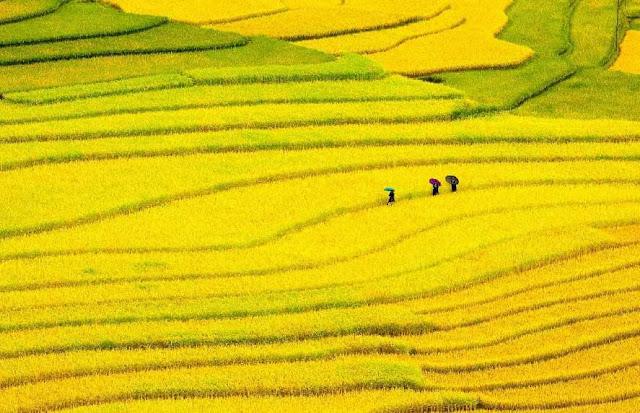 """""""Ngây ngất"""" Hình ảnh đẹp về làng quê Việt Nam đẹp như tranh"""