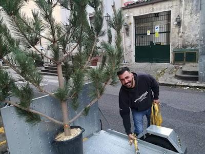 l'albero di Natale donato dal Corpo Forestale al Comitato Civico Quartiere Pagliarelli