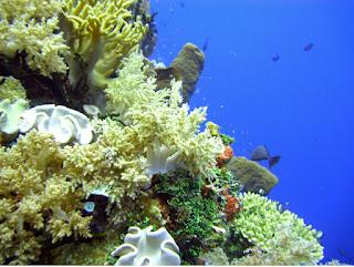 Wakatobi, Sulawesi Tenggara, Indonesia