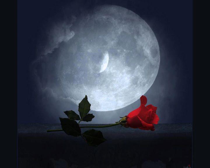 Las Fotos Mas Alucinantes: Luna Y Rosas