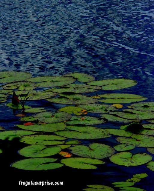 Vegetação aquática típica do Pantanal