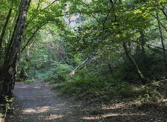 Petts Wood.  Walk around the Hawkwood Estate 17, 30 August 2016.